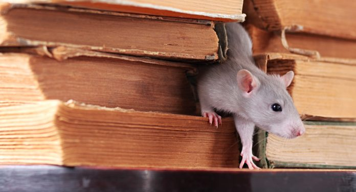 How to Deal With a Rodent Problem In Your College Dorm